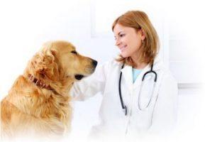 σπουδές κτηνιατρικής στη βουλγαρία